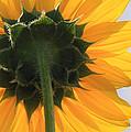 Sunflower Back by Valerie Loop