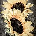 Sunflower Blossoms by Elena Elisseeva