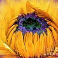 Sunflower Center by Judi Bagwell