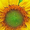 Sunflower Center by Robert Brown