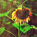 Sunflower by Chastity Hoff