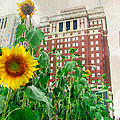 Sunflower City by Alice Gipson