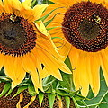 Sunflower Close Up by Frozen in Time Fine Art Photography