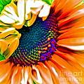 Sunflower Crazed by Gwyn Newcombe