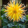 Sunflower by Dhruv Avdhesh