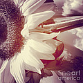 Sunflower Digital Art by Charlie Cliques