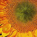 Sunflower Digital Painting by Phyllis Denton