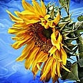 Sunflower Fantasy by Barbara Chichester