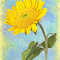 Sunflower Fantasy by Robert Jensen