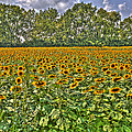 Sunflower Fields Ford World Headquarters Dearborn Mi by A And N Art