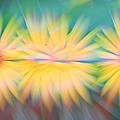 Sunflower Garden Abstract by Dan Sproul