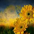 Sunflower Garden by Shirley Mangini