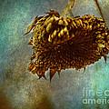 Sunflower Head by Coertje Feil