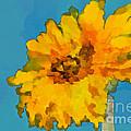 Sunflower Illusion by Gwyn Newcombe