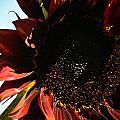 Sunflower by Joel Loftus