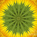 Sunflower Kaleidoscope 3 by Rose Santuci-Sofranko