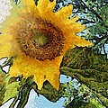 Sunflower Light by SiriSat