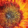 Sunflower Lv by Charles Muhle