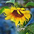 Sunflower Magic I by Jeff McJunkin
