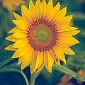Sunflower by Melissa Blazer