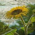 Sunflower Mountain by Michael Hurwitz