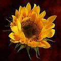 Sunflower Opening by Susan Savad
