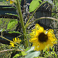 Sunflower Outline 4 by Renie Rutten