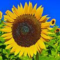Sunflower Power by David Lee Thompson
