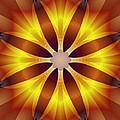 Sunflower Rose by Mario Carini