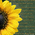 Sunflower Scripture by Constance Woods