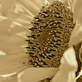 Sunflower by Sheryl Bergman