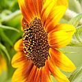 Sunflower Side Portrait by Grace Grogan