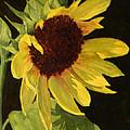 Sunflower Smile by Vikki Bouffard