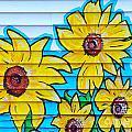 Sunflower Street Art Saint Johns Nfld by Art  MacKay