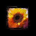 Sunflower Sunset - Art Nouveau  by Absinthe Art By Michelle LeAnn Scott
