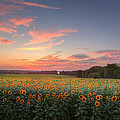 Sunflower Sunset by Bill Wakeley