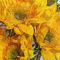 Sunflower Trio by Heidi Smith