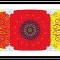 Sunflower Trio - Triptych - Flowers by Barbara Griffin