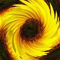 Sunflower Twirl by Neil Finnemore
