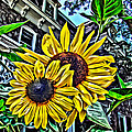 Sunflower Under The Gables Too by Alice Gipson