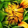 Sunflower Volunteer by Gwyn Newcombe