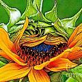 Sunflower Volunteer Half Bloom by Gwyn Newcombe