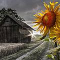 Sunflower Watch by Debra and Dave Vanderlaan