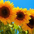 Sunflowers 3 by Dasmin Niriella