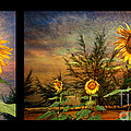Sunflowers by Adrian Evans