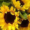 Sunflowers by Amy Vangsgard