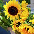 Sunflowers At Market by Brian Jannsen