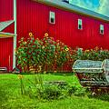 Sunflowers Beside A Big Red Barn by Gene Sherrill