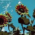 Sunflowers Dream by Florian Rodarte