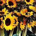 Sunflowers In Blue Bowls by Miriam Danar